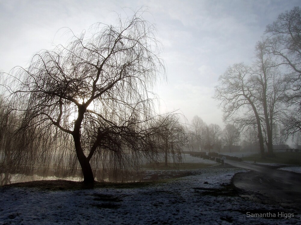 Willow in the Mist by Samantha Higgs