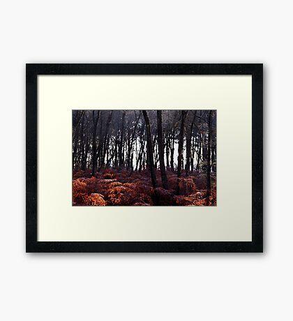 Autumn Morning - Bucklebury Framed Print