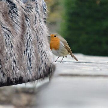 Robin by Sheepandwolf