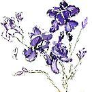 Iris Song by Alma Lee
