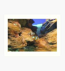 Clown Fish and Sea Anemones  Art Print