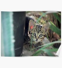 Cute Kitty Poster