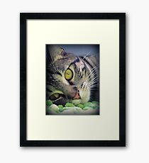 Adorable Kitten Framed Print