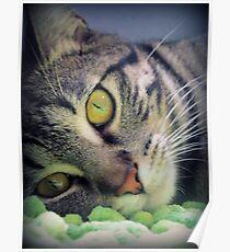 Adorable Kitten Poster
