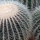 Cactus Spines by Stephen Frost