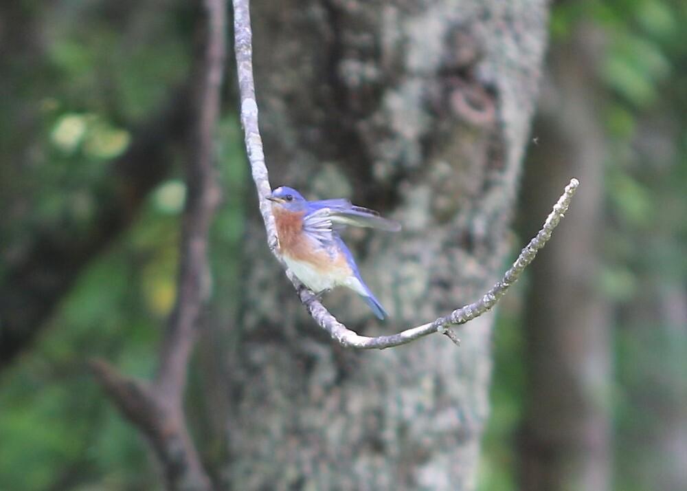 Blue Bird by MaryAnneW