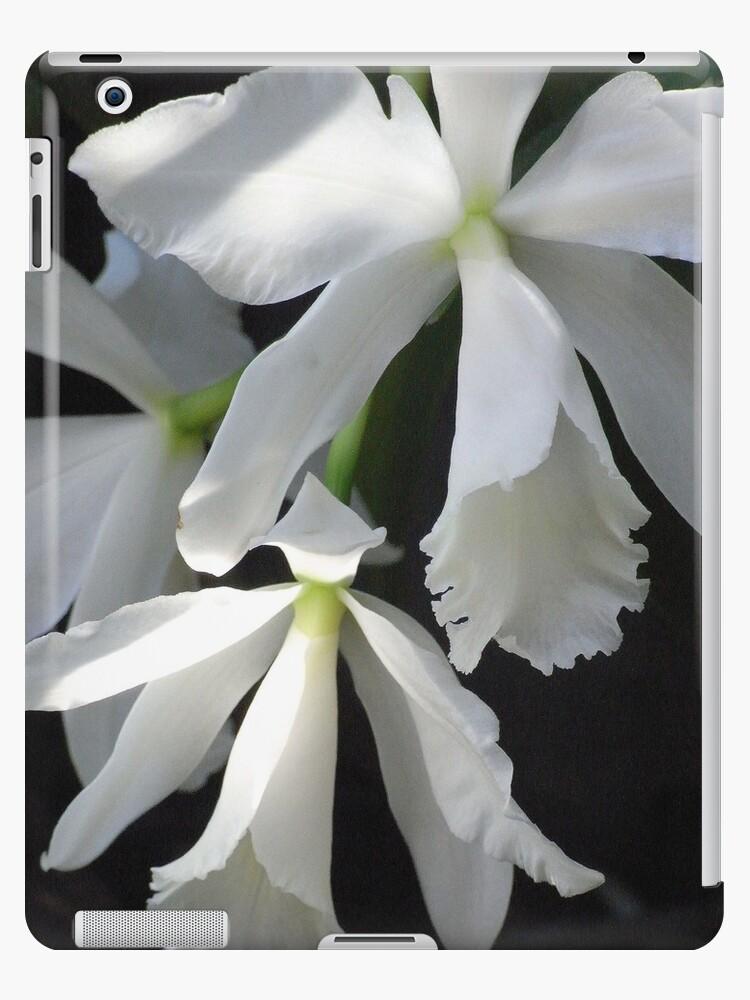 cattleya orchid iPad case by Floralynne