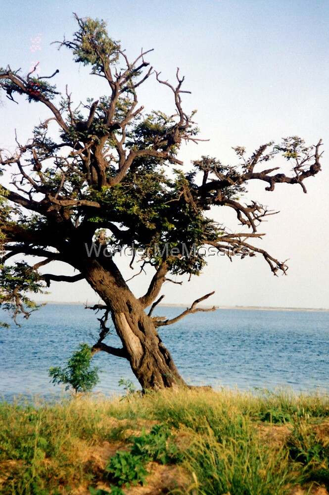 African Tree - Print by WonderMeMosaics