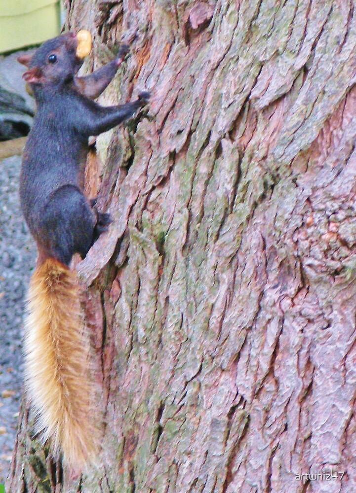 High Fashion Squirrel? by artwhiz47