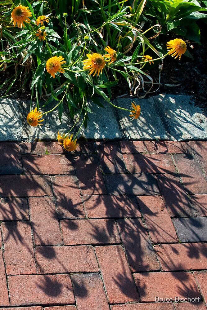 Ecanacea on brick by Bruce Bischoff