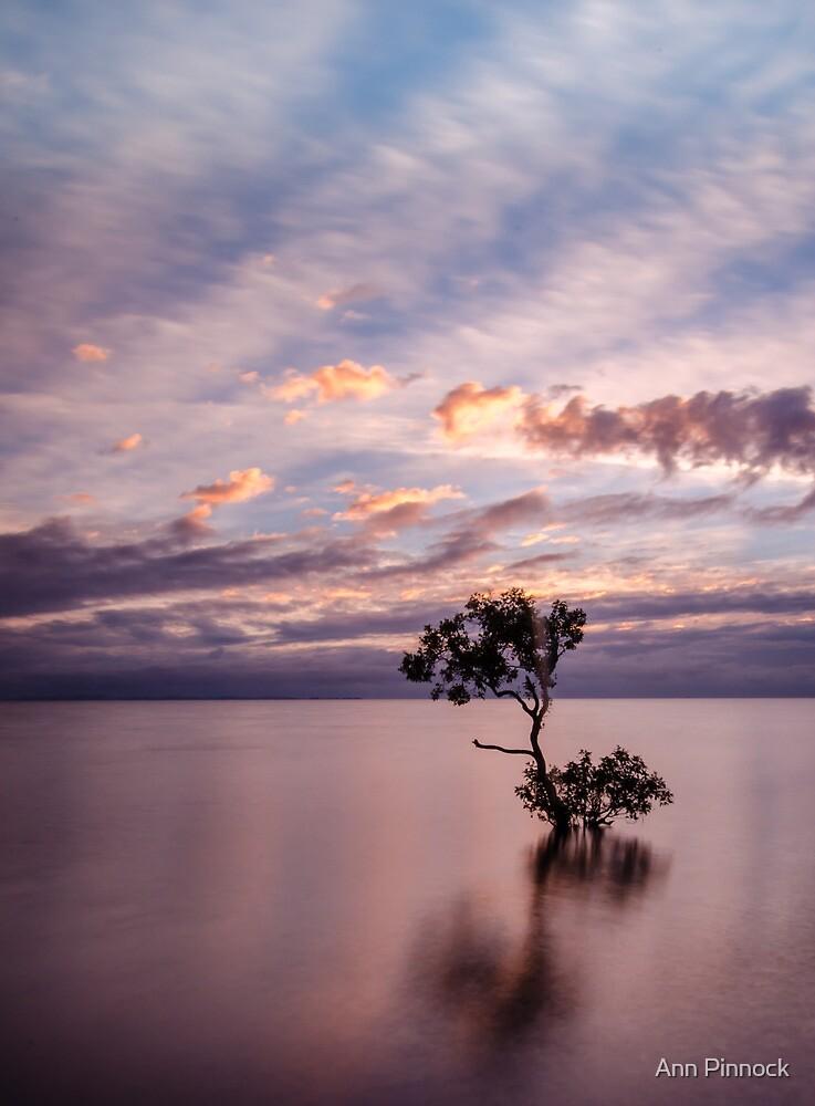 Mangrove Tree at Wellington Point by Ann Pinnock