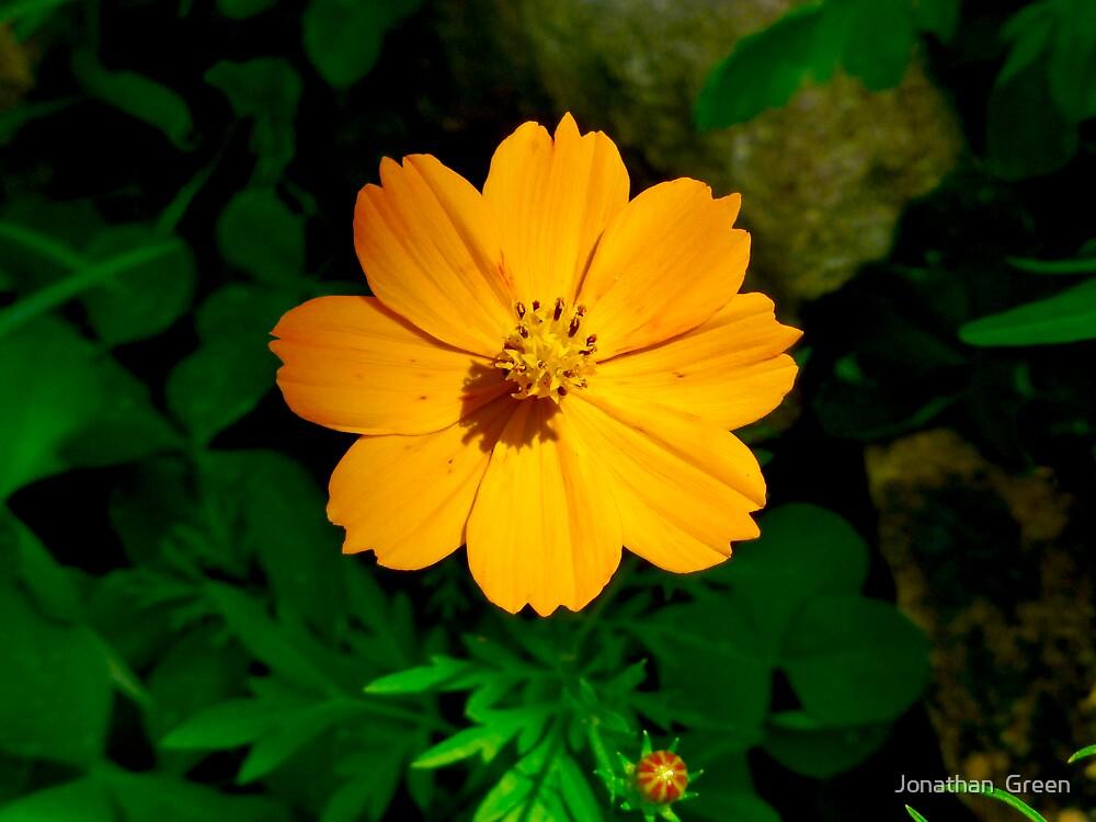 Spring Wildflower by Jonathan  Green