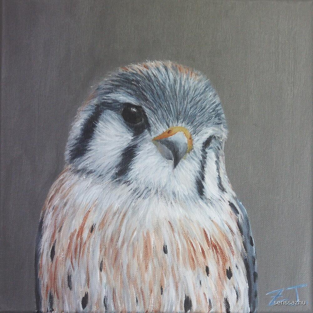 Bird Portrait - American Kestrel by serissazhu