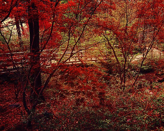 Red Forest by alyphoto
