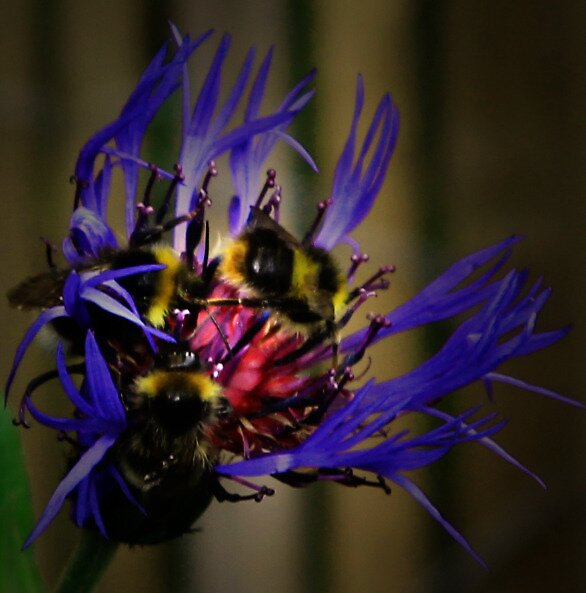 BUSY BEES by leonie7