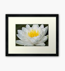 Giant water lily – 1 – Losely Framed Print
