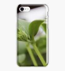 Small Cucumber Plant iPhone Case/Skin