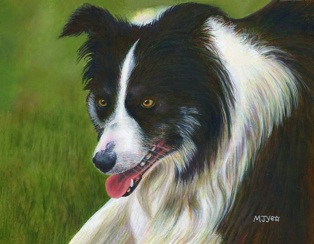 Acrylic painting, Border Collie, pet portrait art by Marion Yeo