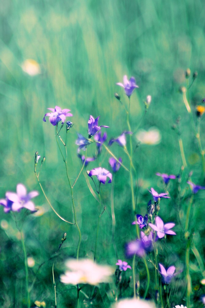 On the Meadow V by LenkaOBS