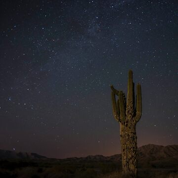 Night Sky in the Desert by MartinaT61