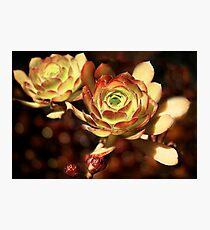 Desert Roses Photographic Print