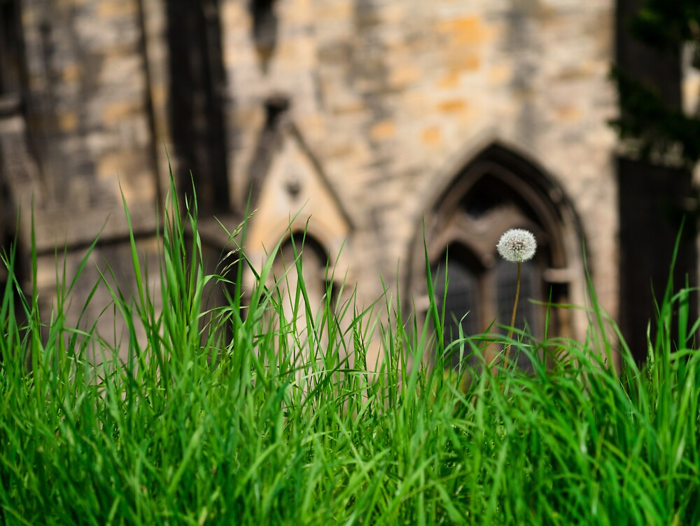 Llandaff Cathedral Lawn by Jimardee