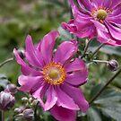 Pink flower 3 by Sheryl Marshall