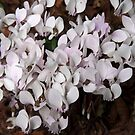 White flower 1 by Sheryl Marshall