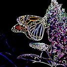 Monarch Butterfly Neon on butterfly bush by NewfieKeith