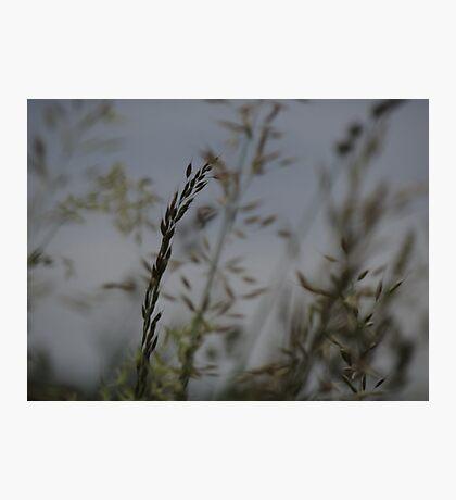 natural grass 1 Photographic Print