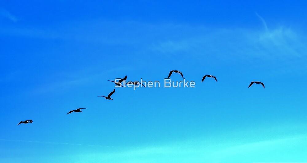 In Flight by Stephen Burke