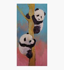 Panda Fun Photographic Print