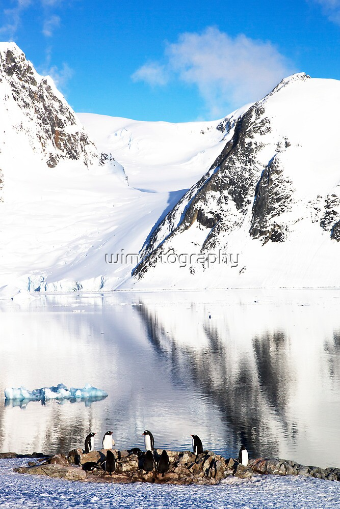 Antartica Penguins by wimfotography