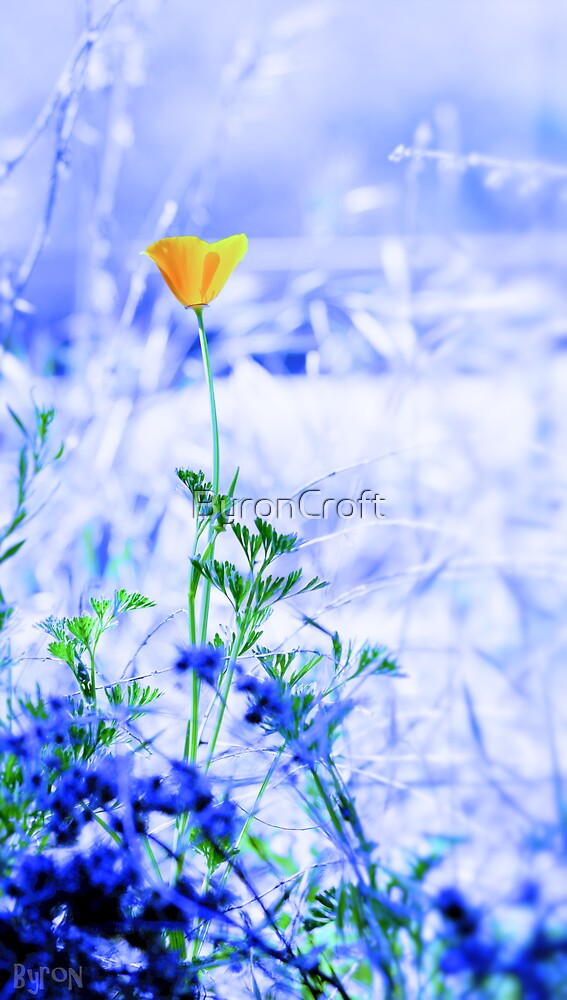 California Poppy Feeling Blue by Byron Croft Photography by ByronCroft