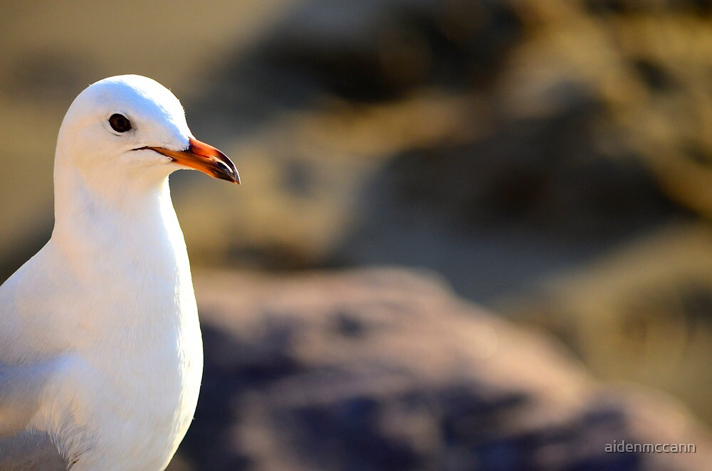 Seagull by aidenmccann