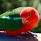Rosella by Apostle