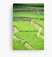 green ricefield Canvas Print
