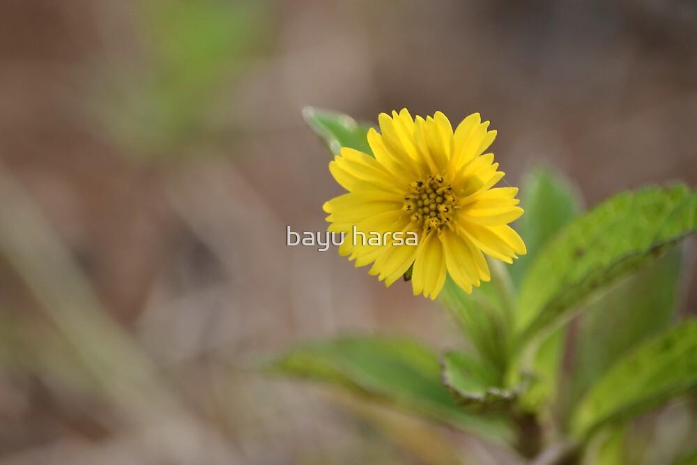 dandelion flower by bayu harsa