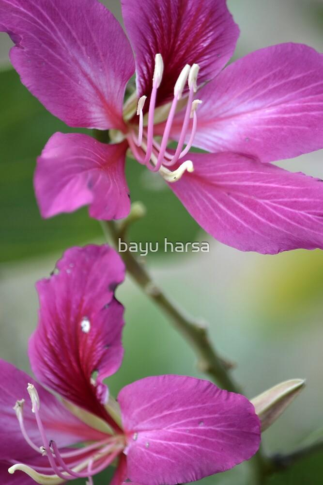 purple flower by bayu harsa