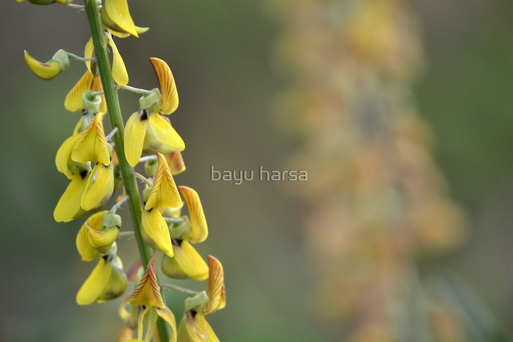 yellow flower by bayu harsa