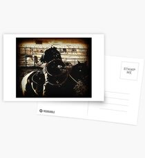 Cowboy Western Rodeo Horse Riding Vintage Look Postcards