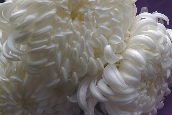 chrysanthemums by demonkourai