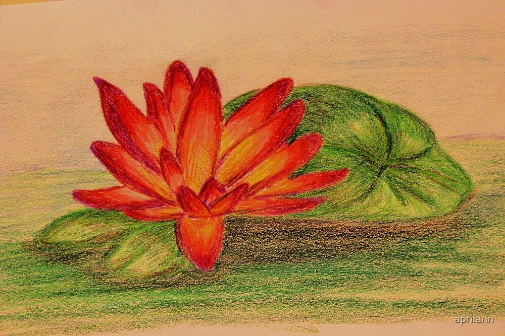 Waterlily - Colored Pencil Drawing by aprilann