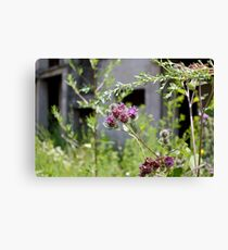 Thistles in front of ruins Canvas Print