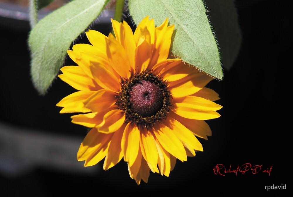 Yellow Flower by rpdavid
