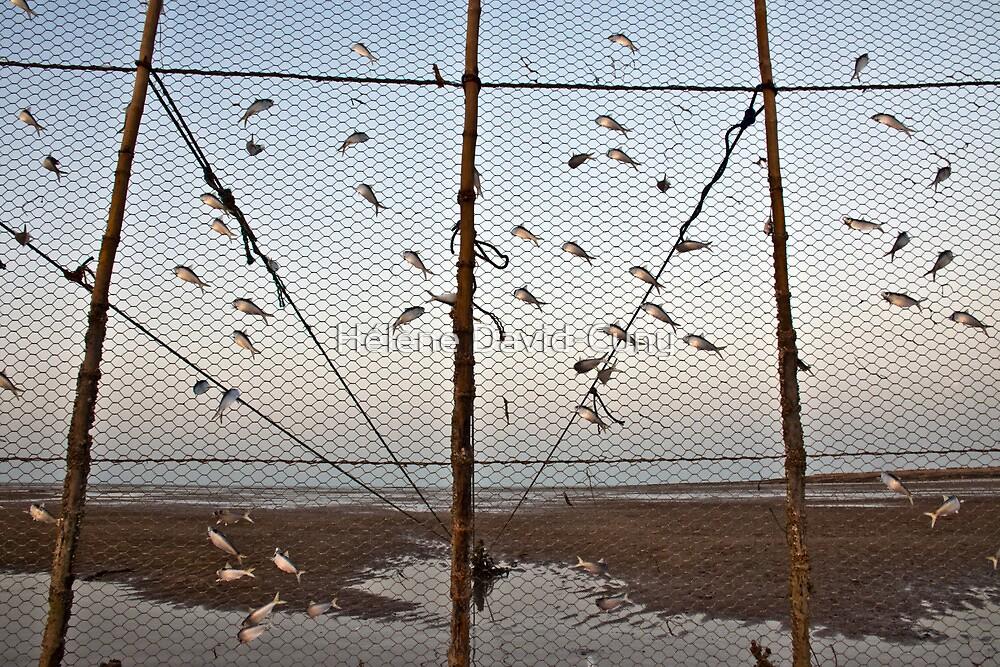 Flying fish by Hélène David-Cuny