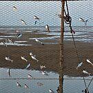 The art of fishing by Hélène David-Cuny