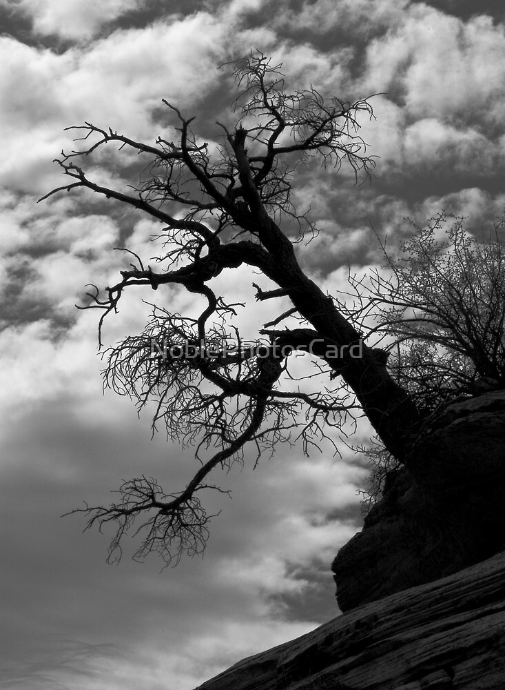 Dramatic Tree on Mountainside by NoblePhotosCard