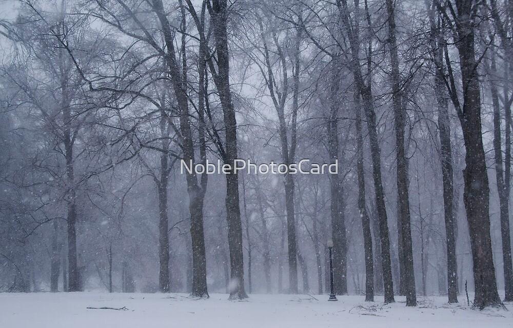 Dreamy Snowfall in Woods by NoblePhotosCard