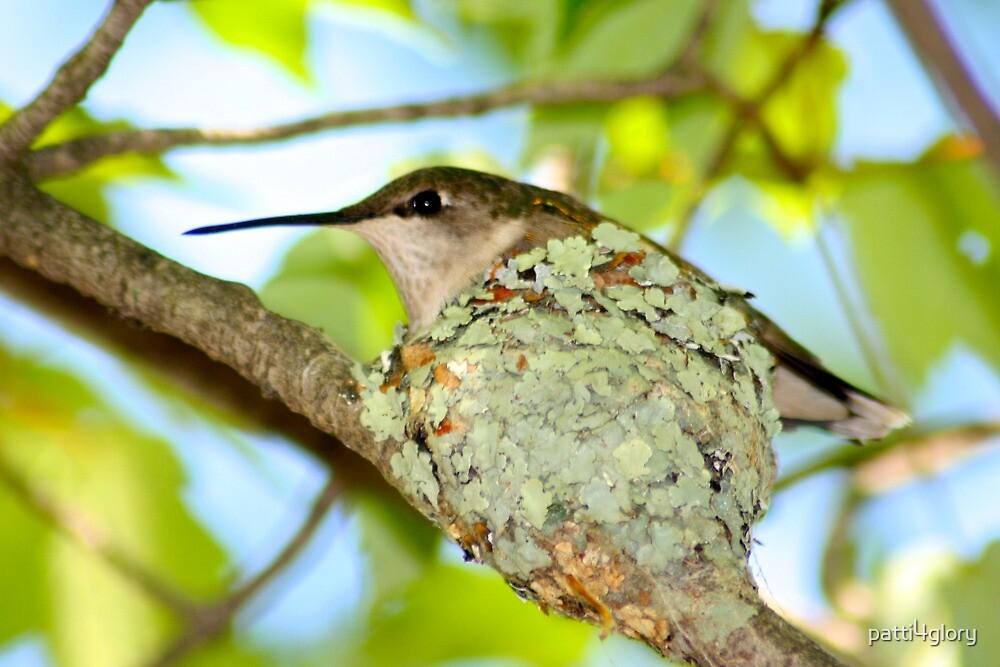 Hummingbird On Her Nest by patti4glory